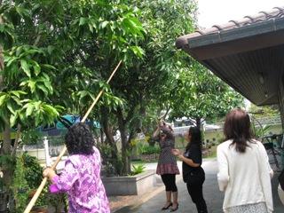 【タイ&ベトナム食の旅】タイ料理教室&ガーデンパーティー♪