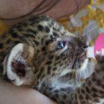 【mayがご案内する中部ローカルの旅】動物好きはタイへ!