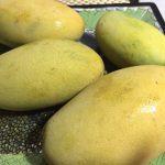 マンゴー、オックロン種