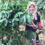 アカ族のコーヒー人生1